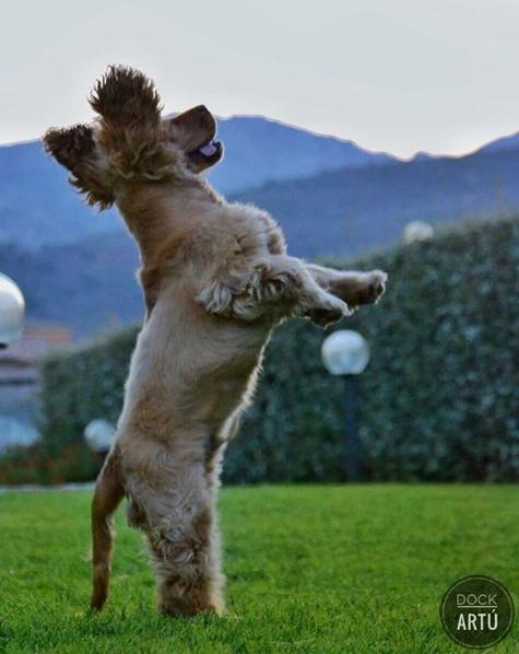 in Sardegna con il cane